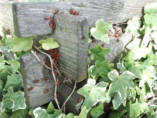 כך תטפחו את הצמחייה בגינה הפרטית
