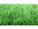 דשא סינטטי דגם נפטון